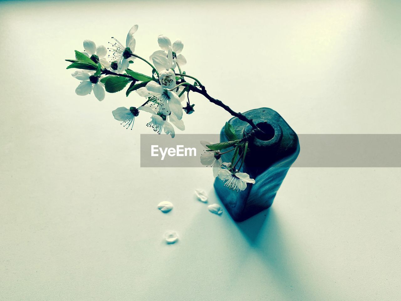 plant, flower, flowering plant, indoors, close-up, no people, table, studio shot, nature, still life, freshness, high angle view, beauty in nature, white background, vase, vulnerability, white color, fragility, leaf, green color, flower head, flower arrangement