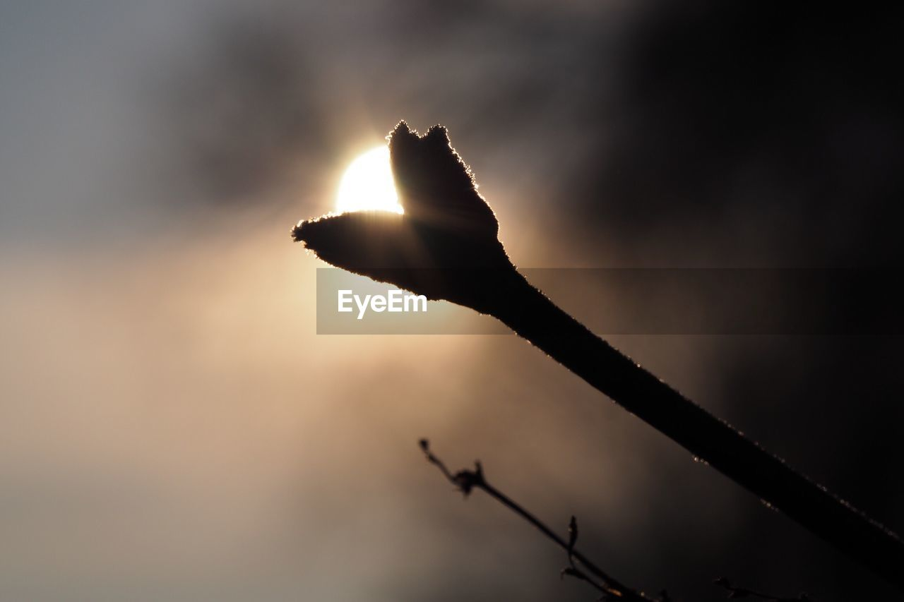 silhouette, sunset, sun, nature, outdoors, sky, no people, beauty in nature, close-up, day