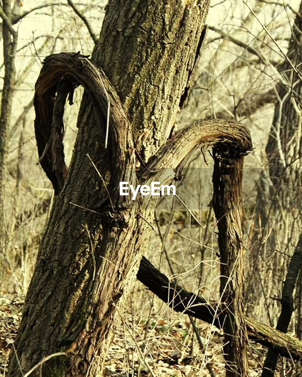tree trunk, tree, dead plant, nature, day, no people, outdoors, focus on foreground, branch, dried plant, dead tree, growth, close-up, beauty in nature
