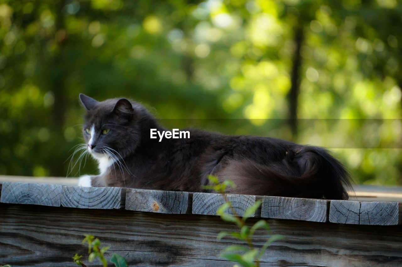 mammal, animal, animal themes, one animal, domestic, cat, domestic cat, feline, pets, domestic animals, vertebrate, relaxation, day, no people, wood - material, focus on foreground, plant, nature, tree, outdoors, whisker