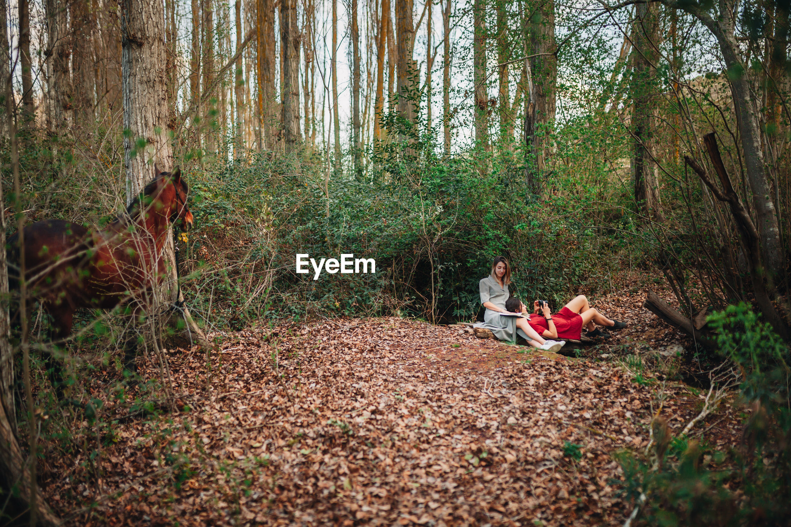 Woman reading book while friend photographing in forest