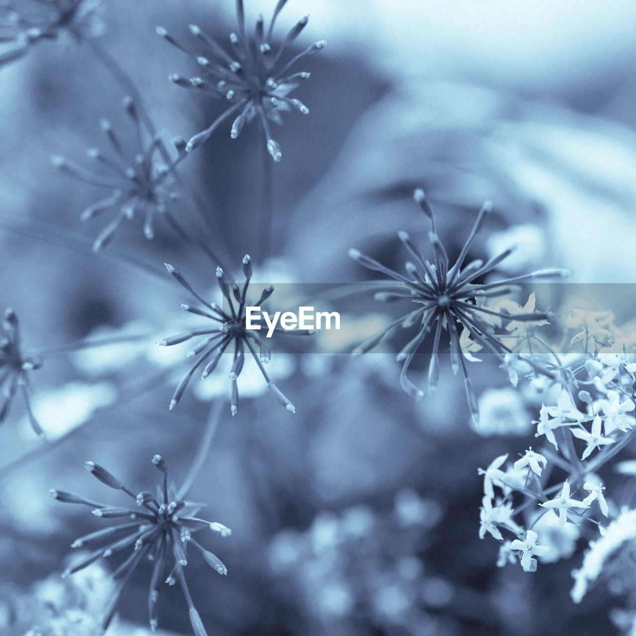 flower, nature, fragility, plant, no people, beauty in nature, close-up, snowflake, freshness, growth, day, flower head, outdoors