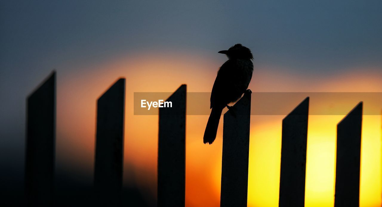 animal themes, bird, animal, animal wildlife, animals in the wild, one animal, vertebrate, perching, silhouette, sunset, no people, communication, black color, sky, outdoors, sign, full length, nature, orange color, text