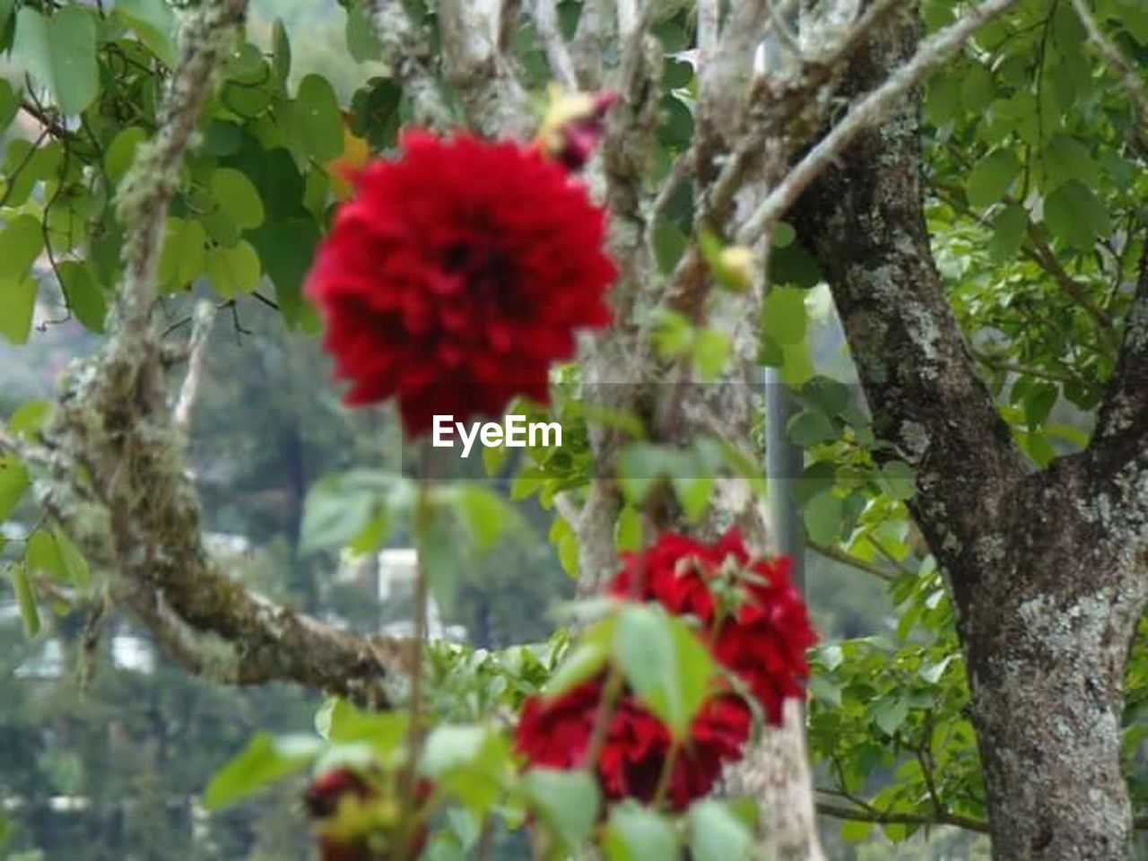 flower, growth, red, plant, fragility, nature, freshness, tree, no people, day, beauty in nature, flower head, blooming, outdoors, close-up