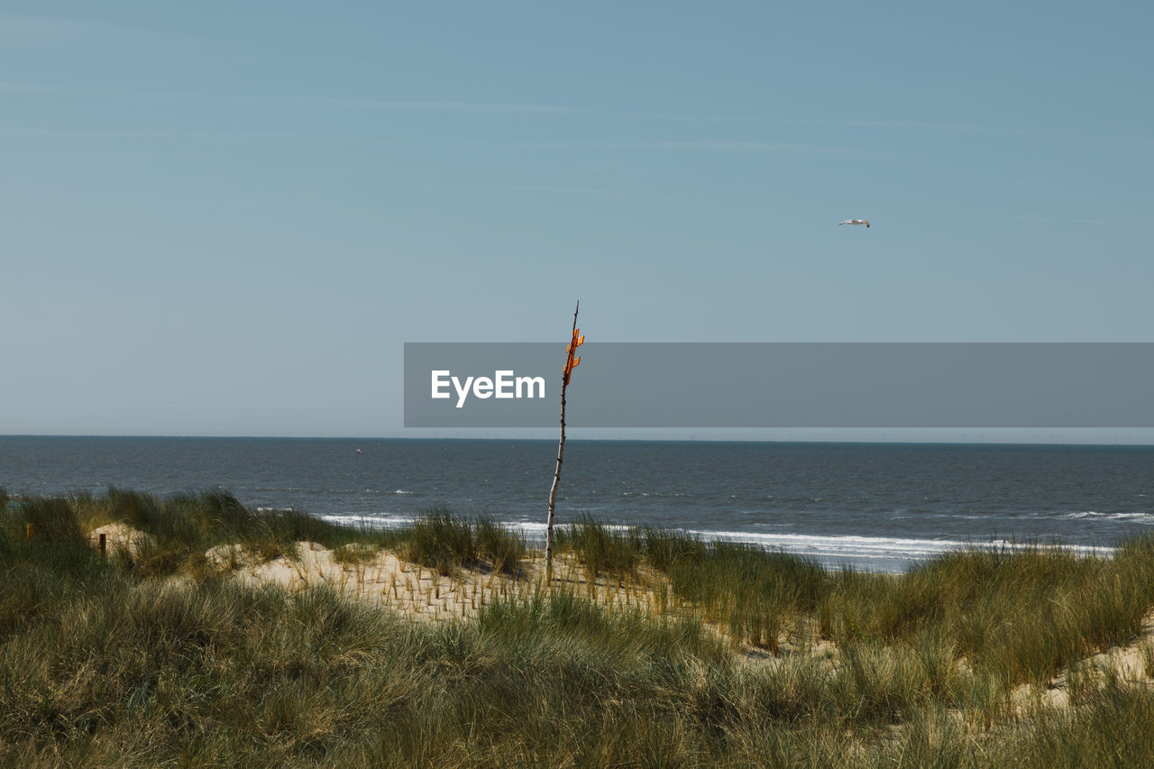 water, sea, grass, sky, horizon over water, flag, horizon, beauty in nature, nature, day, scenics - nature, land, tranquility, tranquil scene, no people, beach, plant, environment, patriotism, outdoors, wind, marram grass