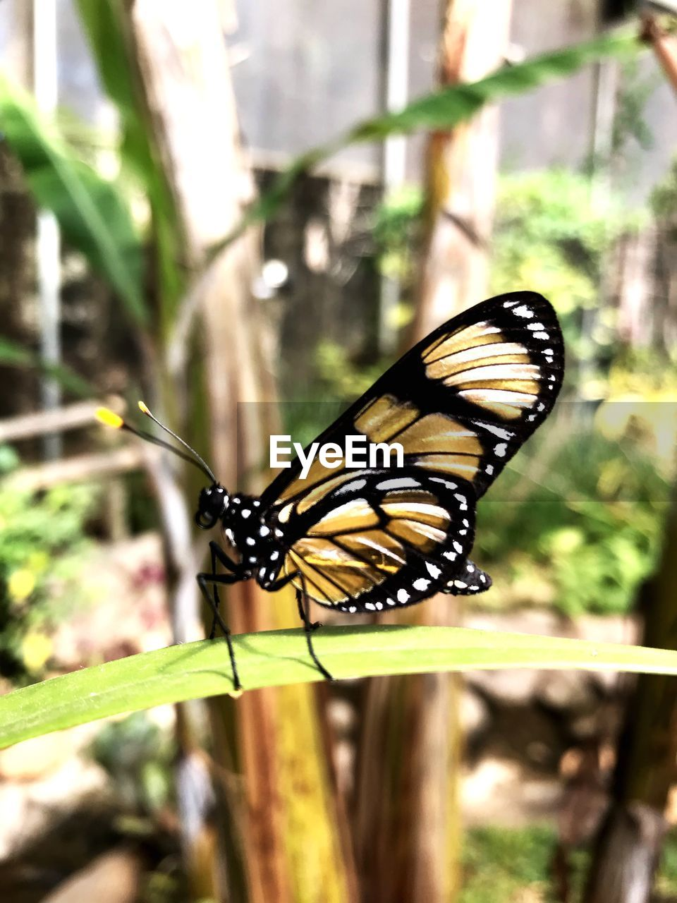 animal themes, animal wildlife, animal, one animal, animals in the wild, invertebrate, insect, animal wing, close-up, butterfly - insect, plant, day, focus on foreground, beauty in nature, nature, no people, flower, animal markings, outdoors, growth, butterfly