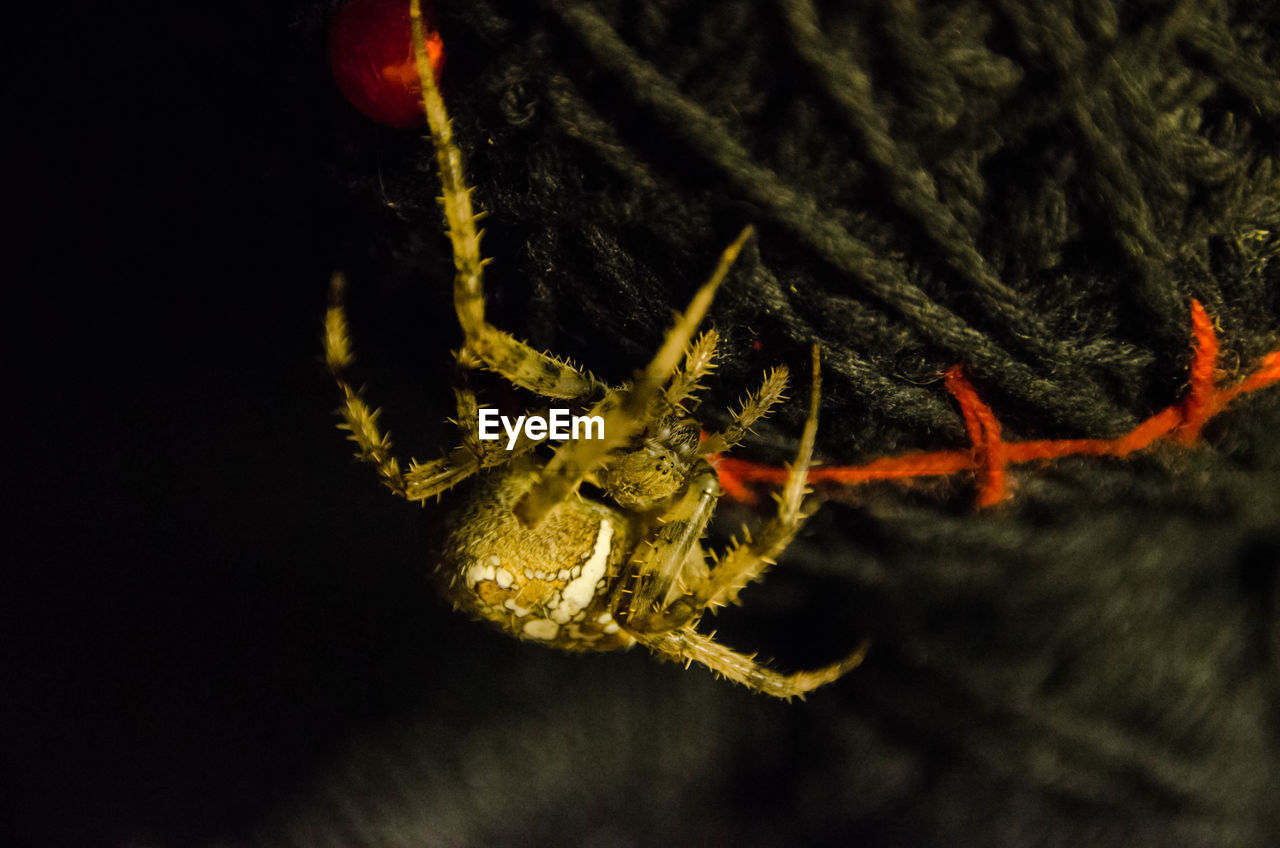 one animal, spider, animal themes, animals in the wild, animal wildlife, close-up, no people, night, nature, outdoors