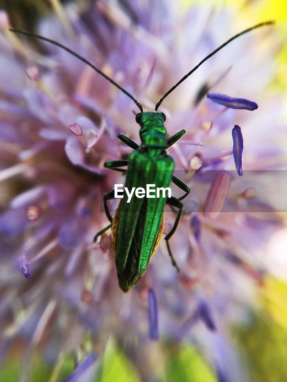 insect, one animal, animal themes, no people, animals in the wild, nature, green color, close-up, day, outdoors, flower, beauty in nature