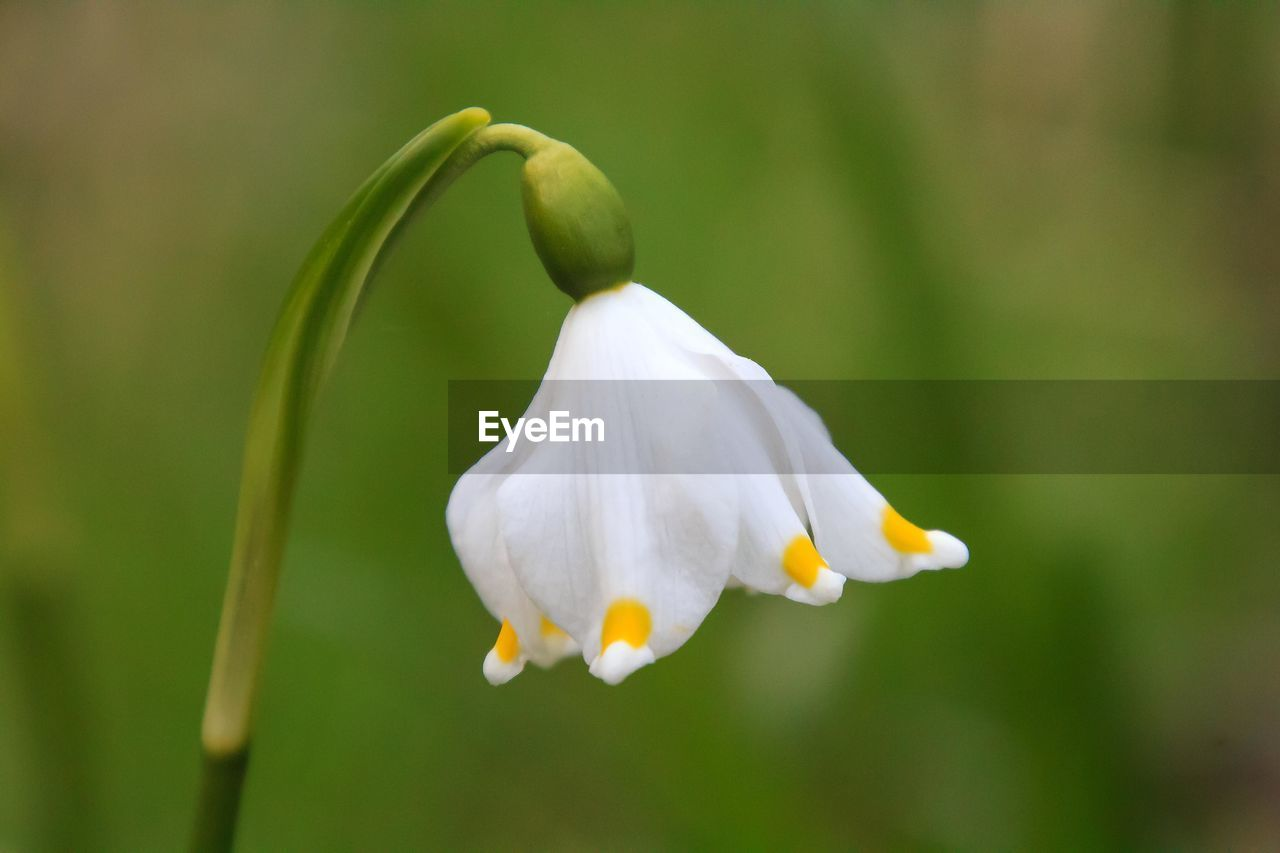 beauty in nature, fragility, petal, flowering plant, flower, plant, vulnerability, growth, freshness, white color, inflorescence, close-up, flower head, focus on foreground, no people, day, nature, outdoors, green color, pollen