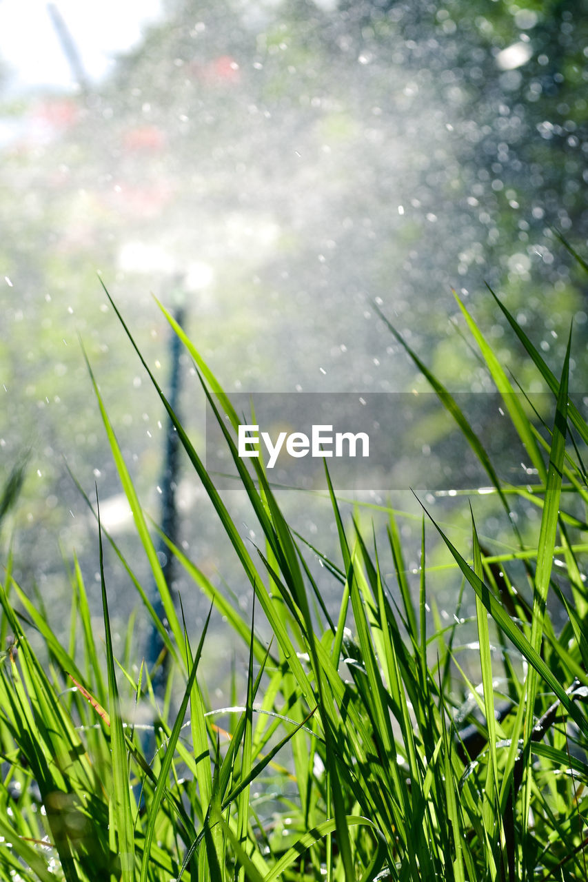 plant, growth, grass, green color, water, nature, day, drop, field, beauty in nature, wet, no people, land, focus on foreground, close-up, freshness, tranquility, outdoors, blade of grass, rain, raindrop, dew