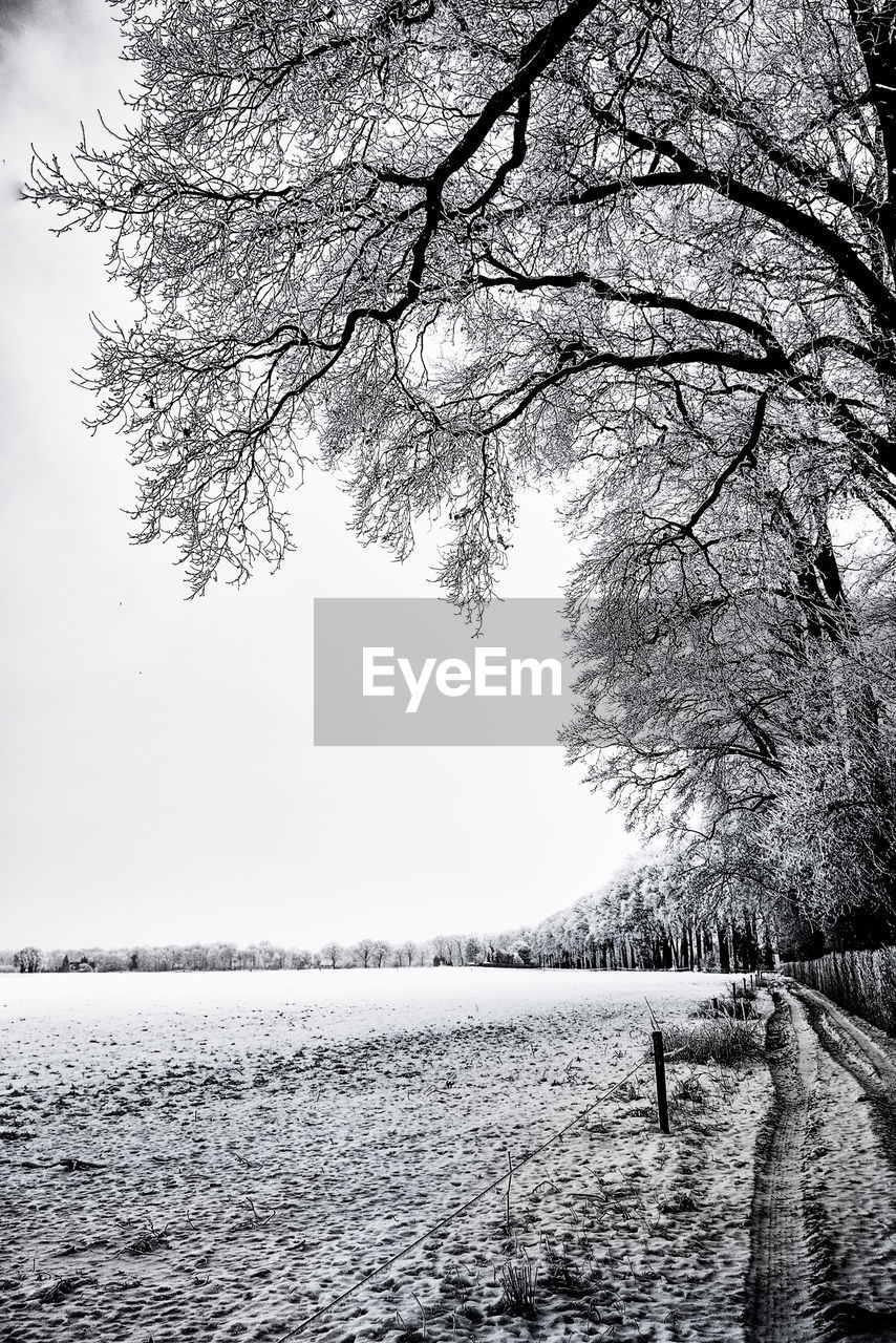 BARE TREE ON SNOW COVERED LANDSCAPE