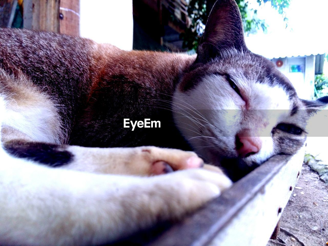 mammal, domestic, animal themes, pets, animal, cat, feline, domestic animals, domestic cat, one animal, vertebrate, relaxation, sleeping, eyes closed, no people, close-up, resting, lying down, whisker, animal body part, animal head, napping