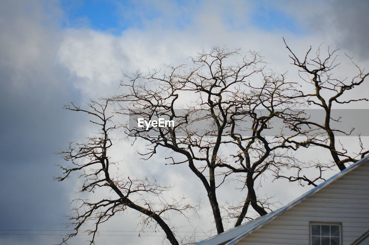 sky, tree, nature, bare tree, no people, branch, outdoors, cloud - sky, day, low angle view, beauty in nature, close-up