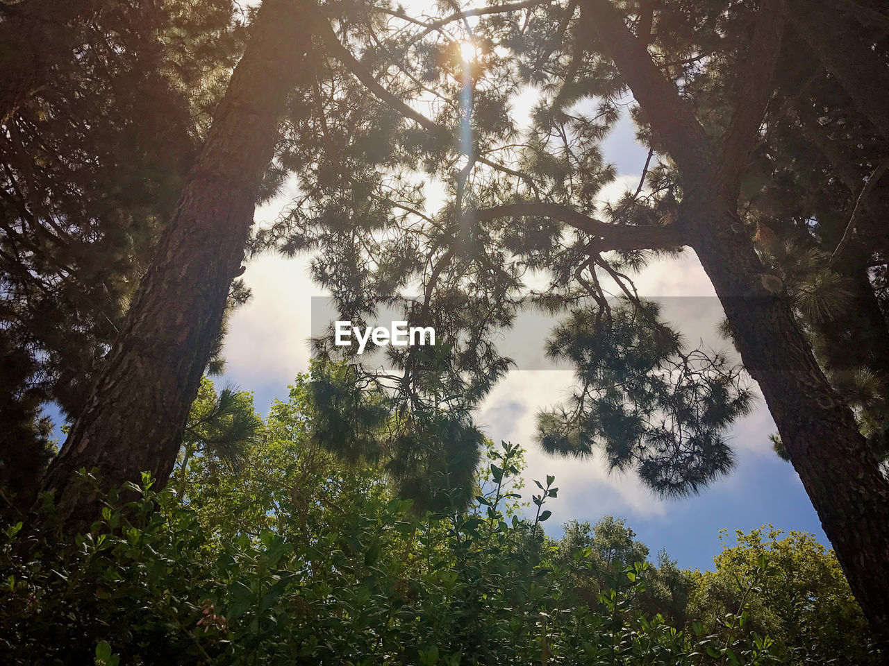 LOW ANGLE VIEW OF TREES AGAINST SKY IN FOREST