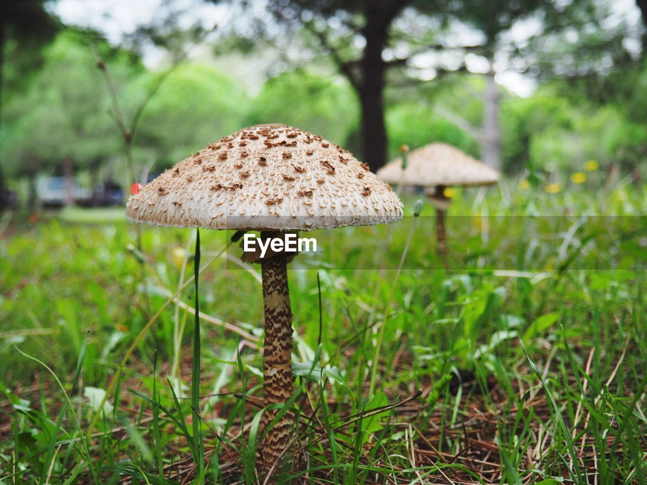 mushroom, fungus, plant, growth, land, food, vegetable, field, grass, focus on foreground, nature, tree, toadstool, day, green color, beauty in nature, no people, close-up, forest, freshness, outdoors, wild