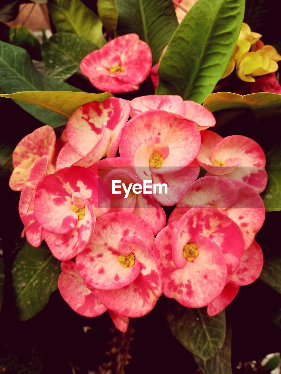 flower, beauty in nature, growth, petal, nature, fragility, plant, pink color, freshness, no people, flower head, leaf, close-up, outdoors, day, blooming
