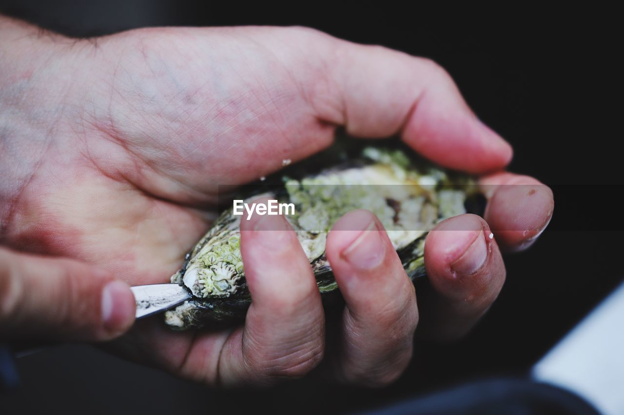 Close-Up Of Human Hand Holding Shell