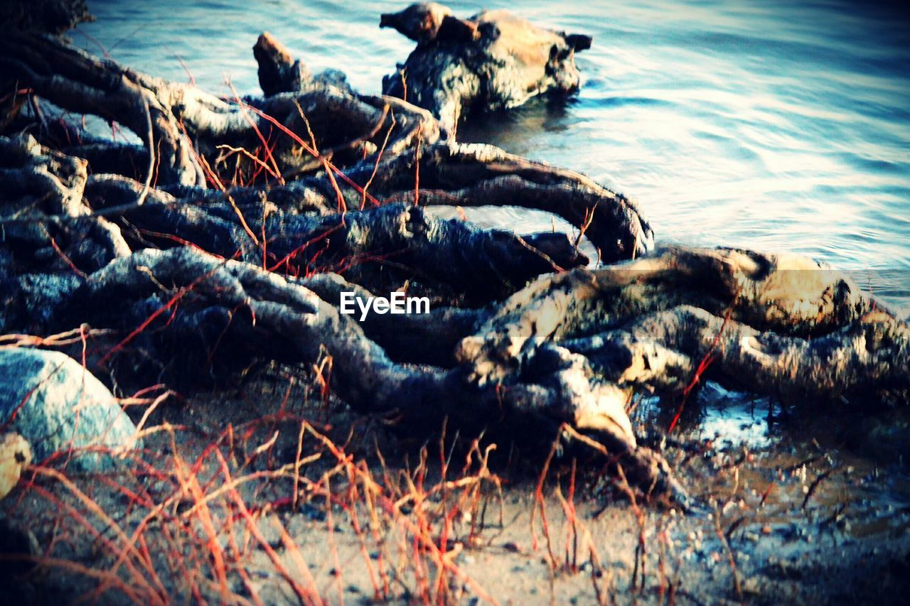 animal themes, no people, animals in the wild, one animal, nature, outdoors, lying down, day, water, mammal, close-up