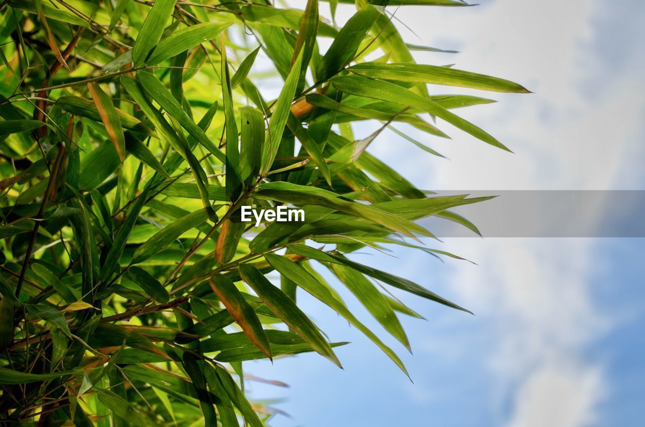 leaf, plant part, plant, growth, green color, nature, beauty in nature, no people, close-up, day, tree, focus on foreground, tranquility, sky, outdoors, low angle view, freshness, branch, selective focus, sunlight, leaves, palm leaf