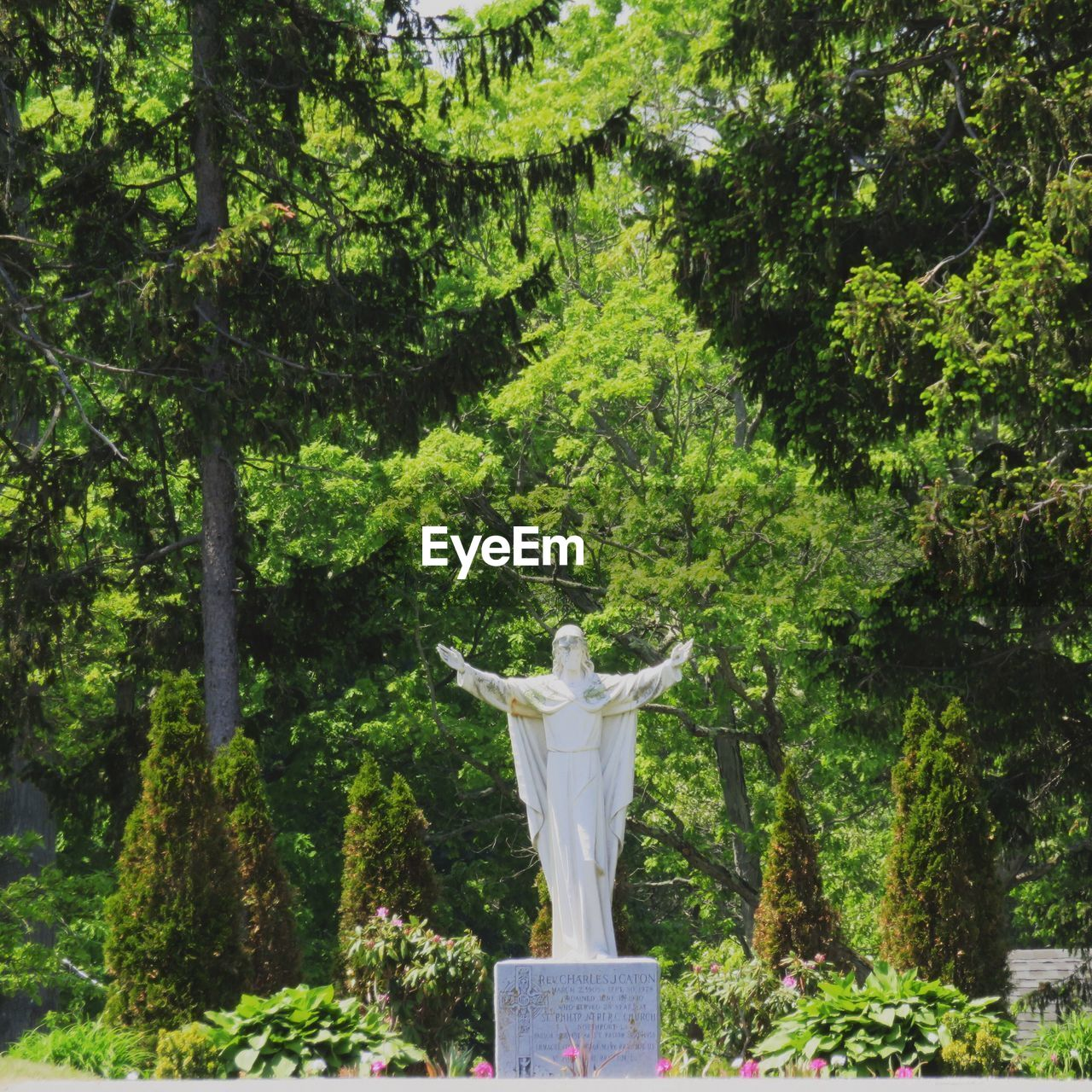 tree, nature, statue, human representation, green color, sculpture, lush foliage, day, outdoors, growth, no people