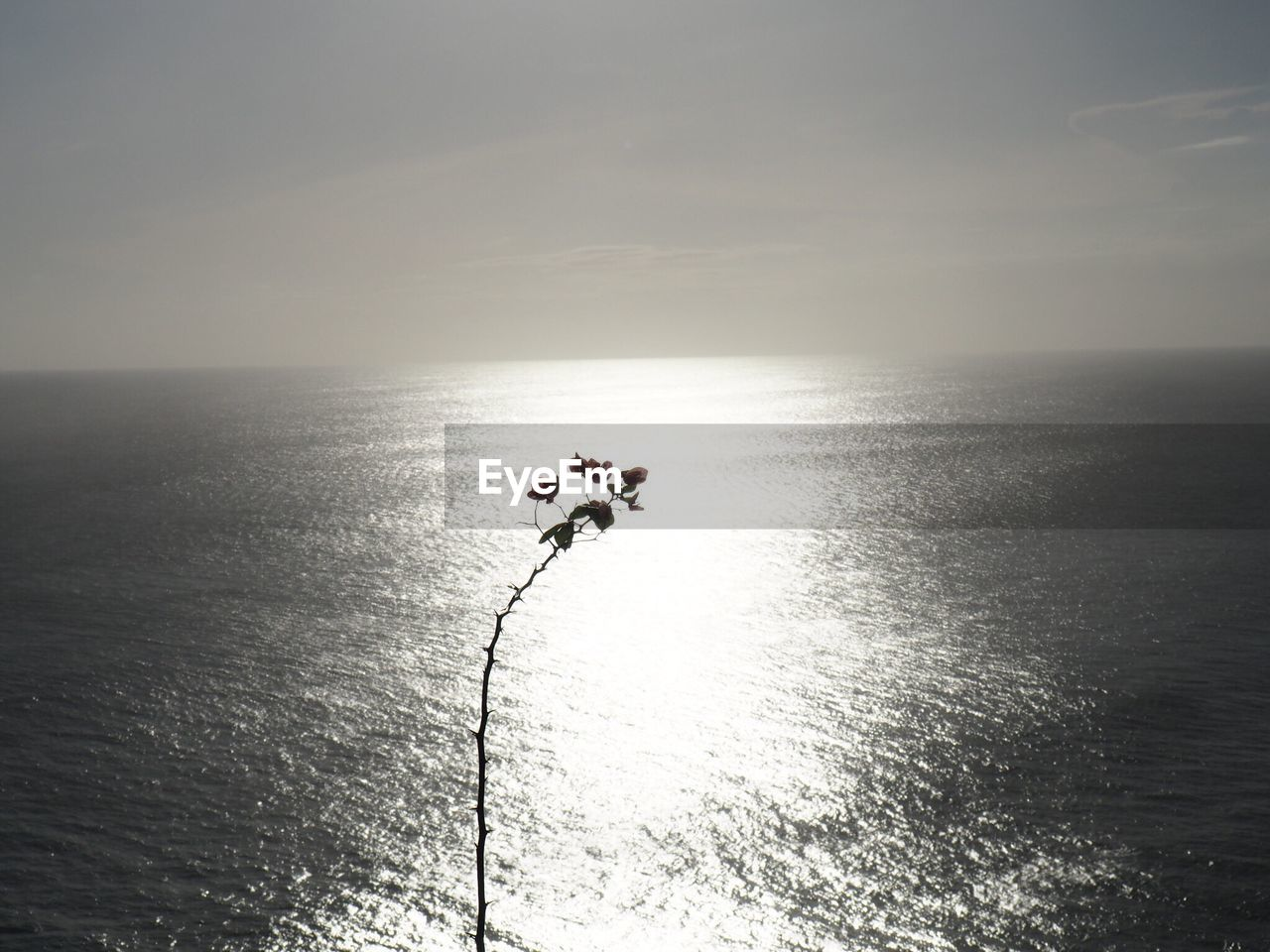 Plant Against Sea During Sunset