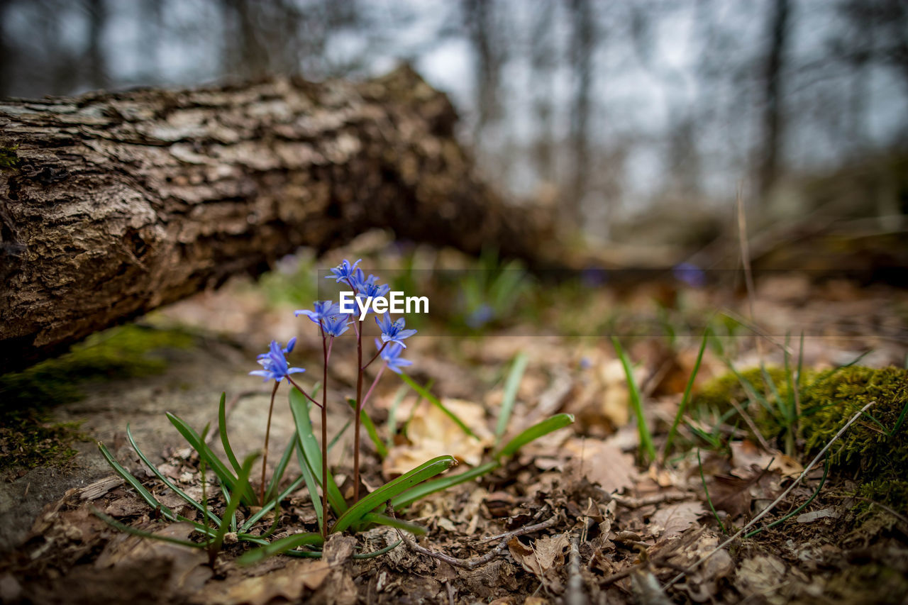 plant, flowering plant, flower, vulnerability, fragility, freshness, beauty in nature, growth, nature, petal, focus on foreground, land, no people, day, close-up, field, inflorescence, purple, flower head, tree, outdoors, iris, crocus
