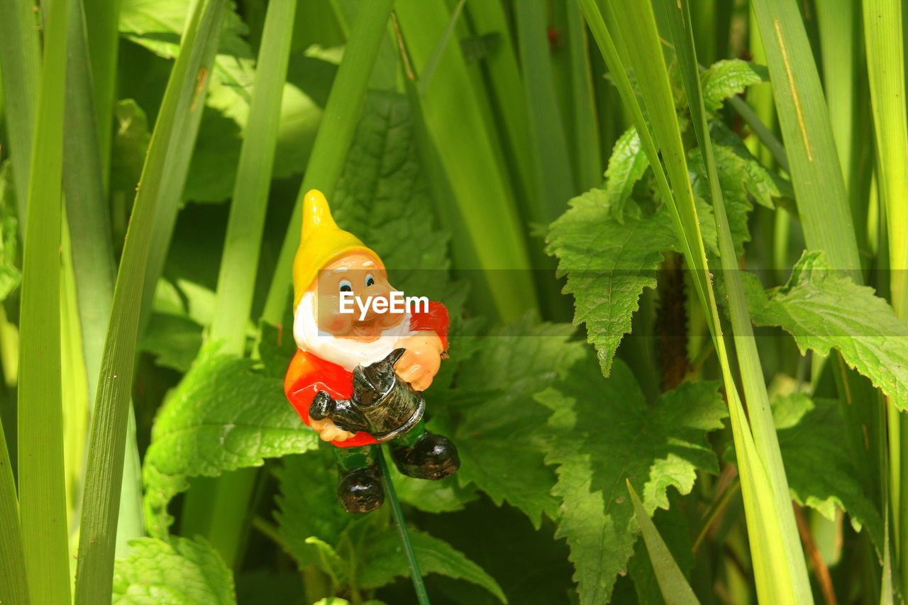 green color, leaf, growth, no people, plant, close-up, day, outdoors, nature, ladybug, animal themes