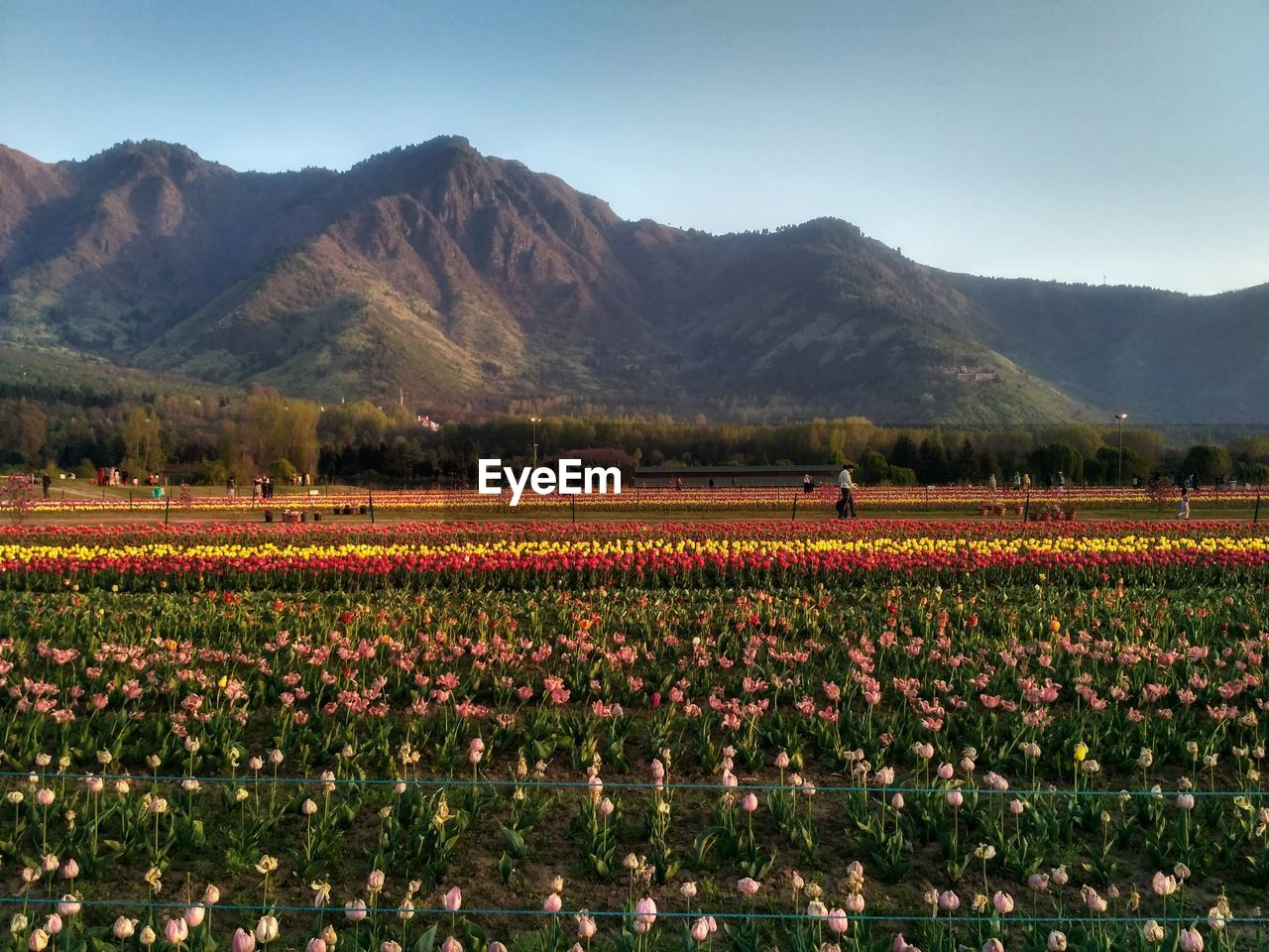 Scenic view of flowering plants against mountains and sky