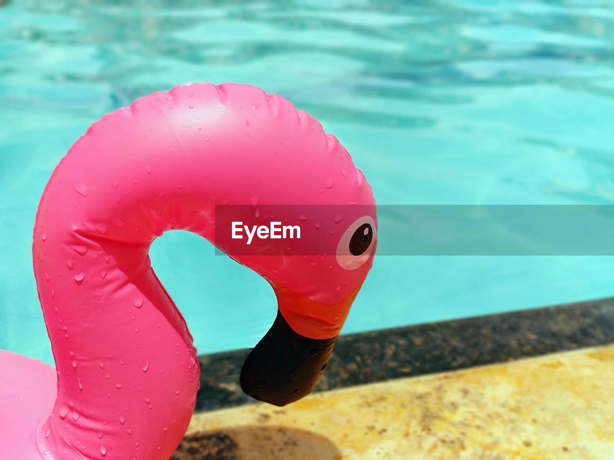 The head of a plastic flamingo by a poolside