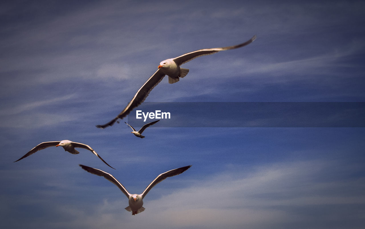 animal wildlife, flying, bird, animal themes, animal, animals in the wild, spread wings, vertebrate, sky, cloud - sky, group of animals, no people, mid-air, nature, low angle view, seagull, day, beauty in nature, outdoors, blue