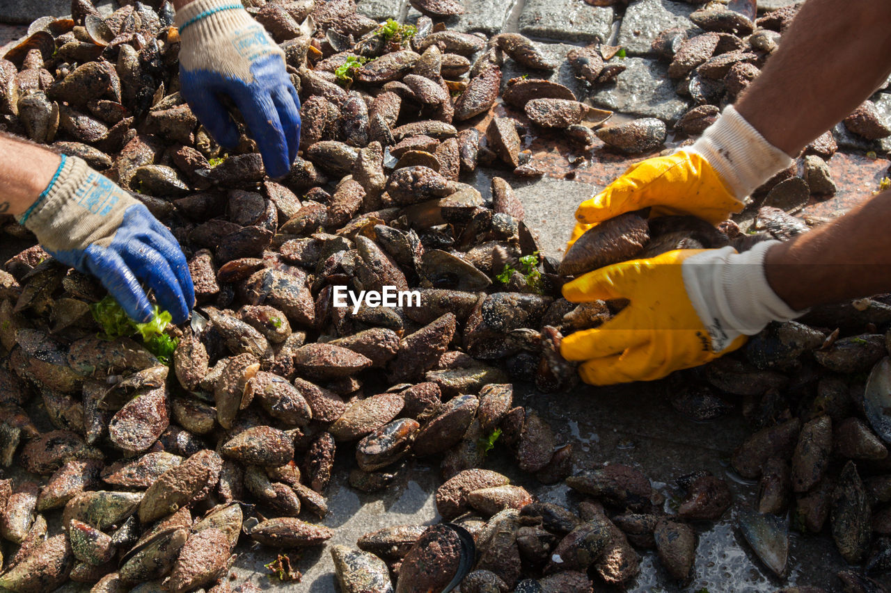 Close-Up Of Men Collecting Mussels