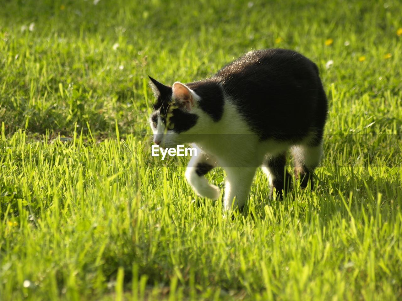 Close-Up Of A Cat On Grassland