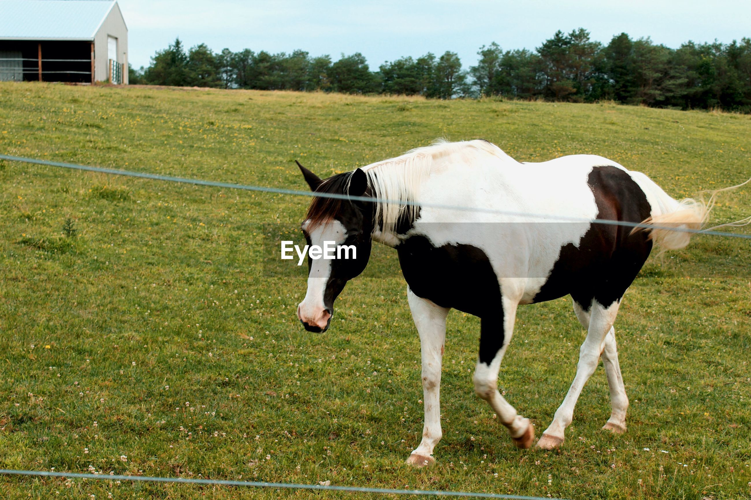 HORSE STANDING IN FARM