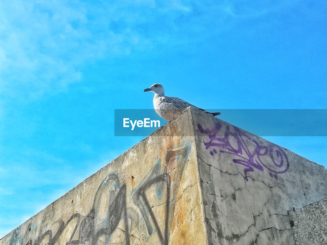 low angle view, animals in the wild, animal themes, sky, animal wildlife, vertebrate, bird, animal, one animal, blue, perching, architecture, day, no people, nature, built structure, building exterior, wall - building feature, wall, outdoors, seagull