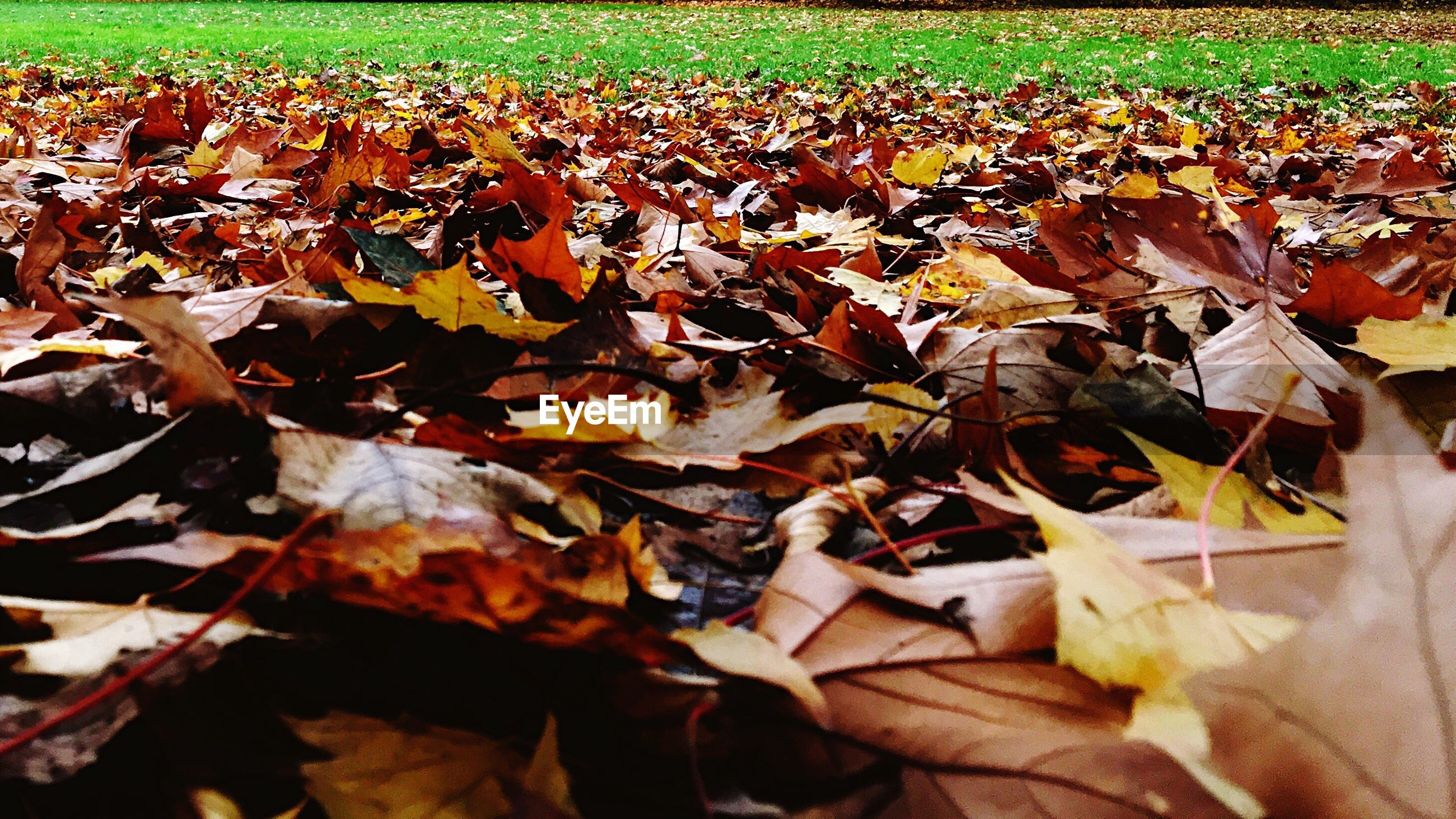 Autumn leaves on field at park