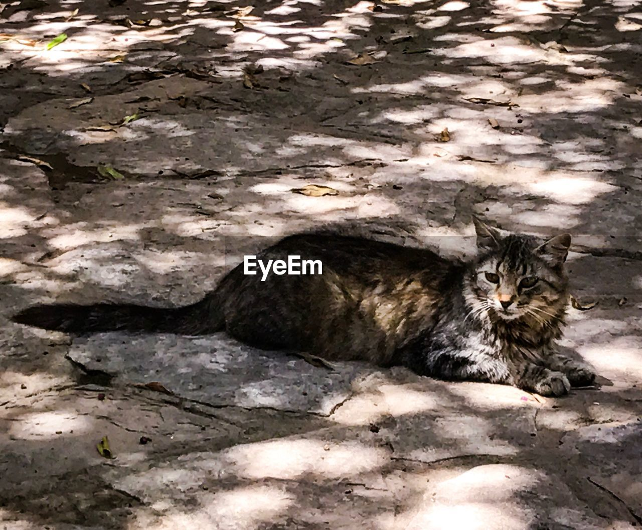 domestic cat, animal themes, feline, one animal, pets, domestic animals, mammal, cat, high angle view, shadow, sunlight, day, no people, outdoors, sitting, nature