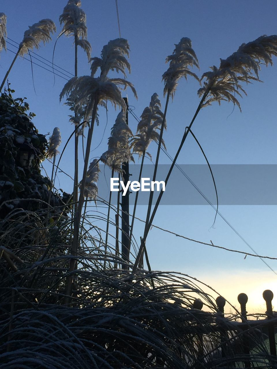 palm tree, low angle view, outdoors, nature, growth, beach, blue, clear sky, day, tree, no people, beauty in nature, sky, water, close-up