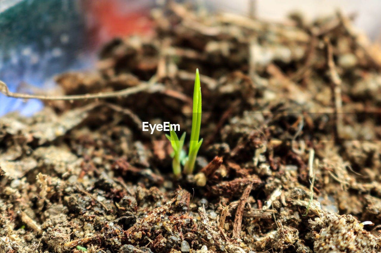 growth, plant, young plant, nature, new life, beginnings, fragility, no people, close-up, day, outdoors, beauty in nature, freshness