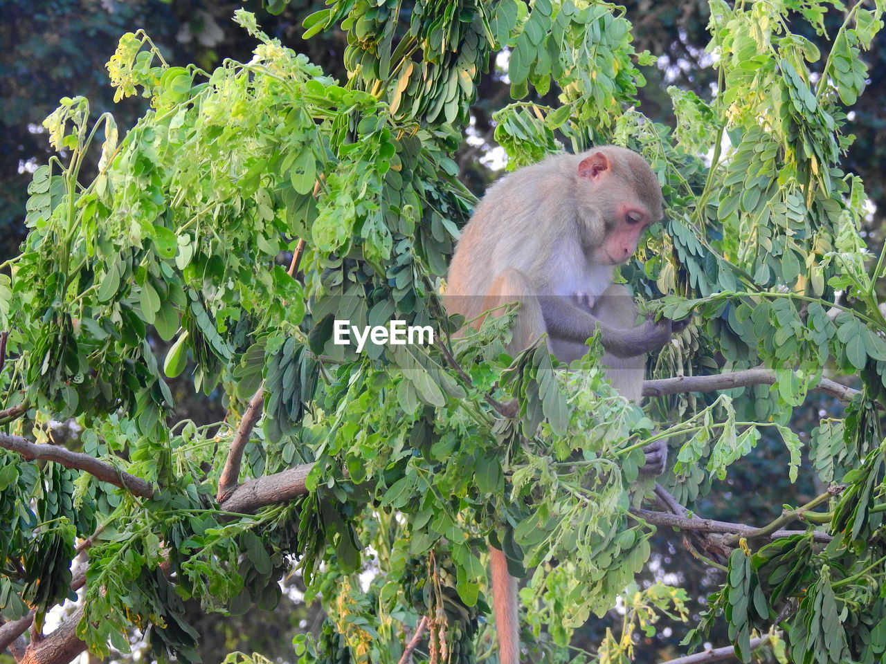 primate, monkey, animal wildlife, animal, animals in the wild, animal themes, mammal, plant, one animal, tree, vertebrate, leaf, plant part, nature, growth, green color, no people, forest, branch, day, outdoors, baboon, rainforest