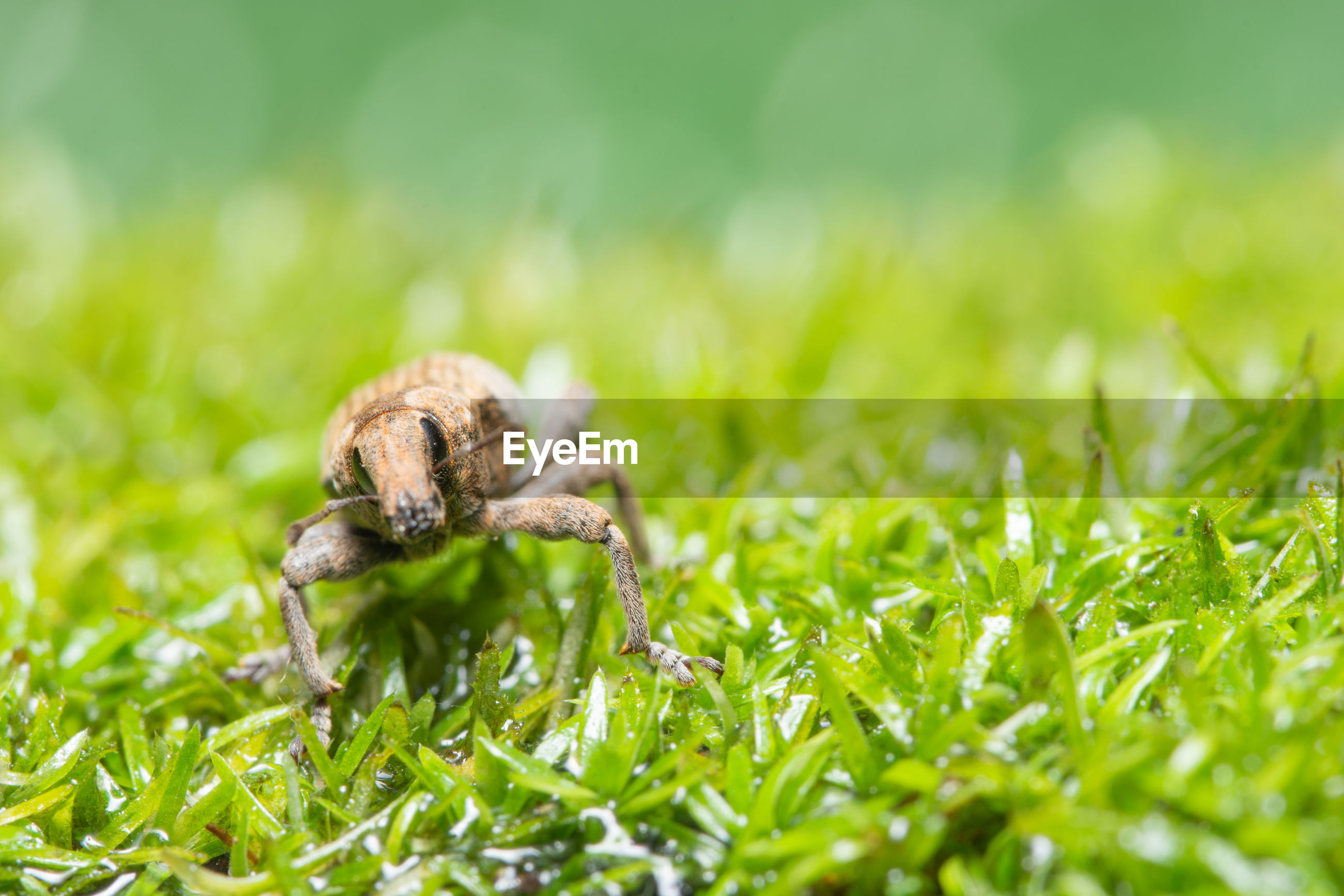 Close-up of spider on grass