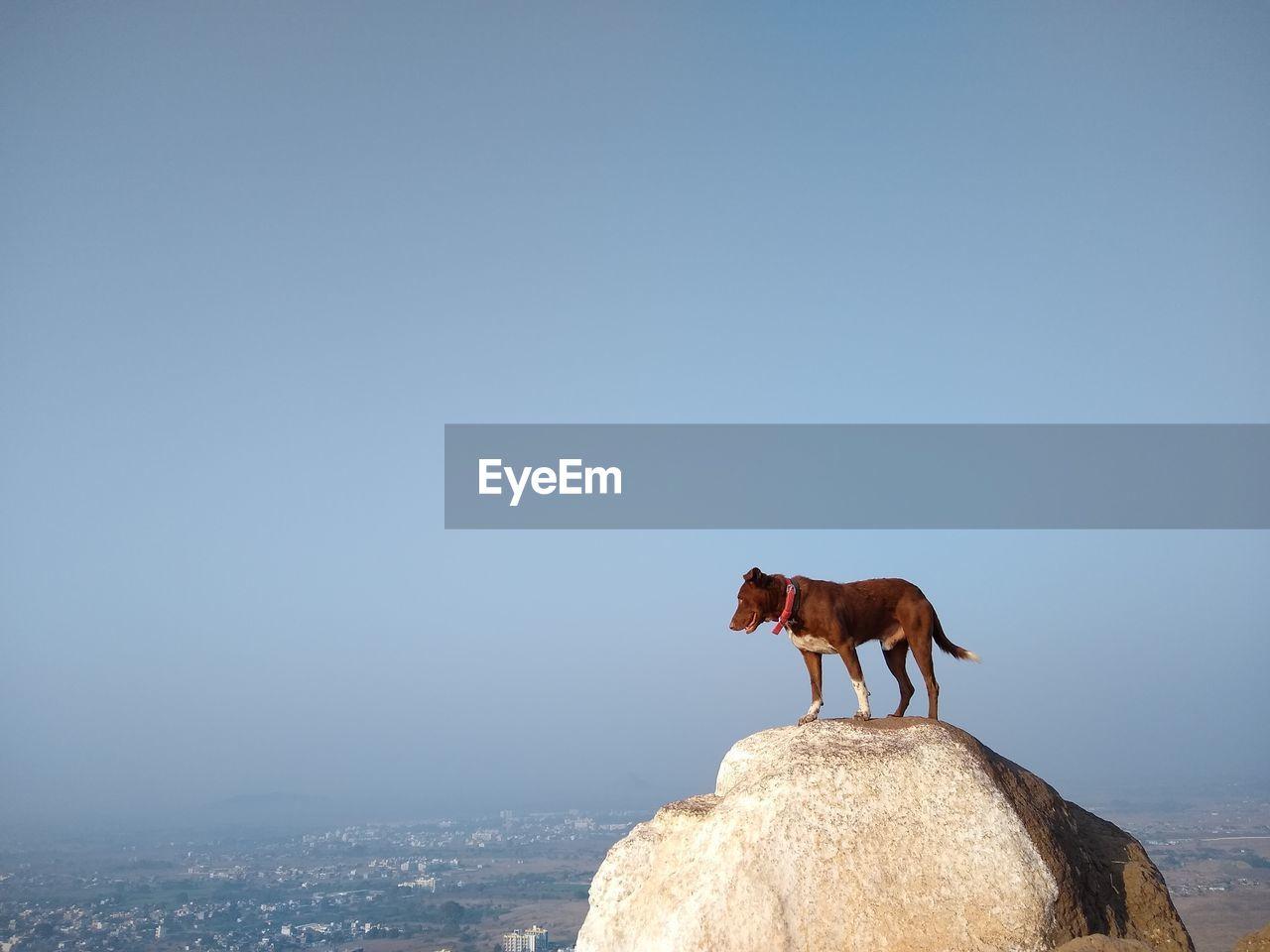 Dog enjoying beautiful landscape