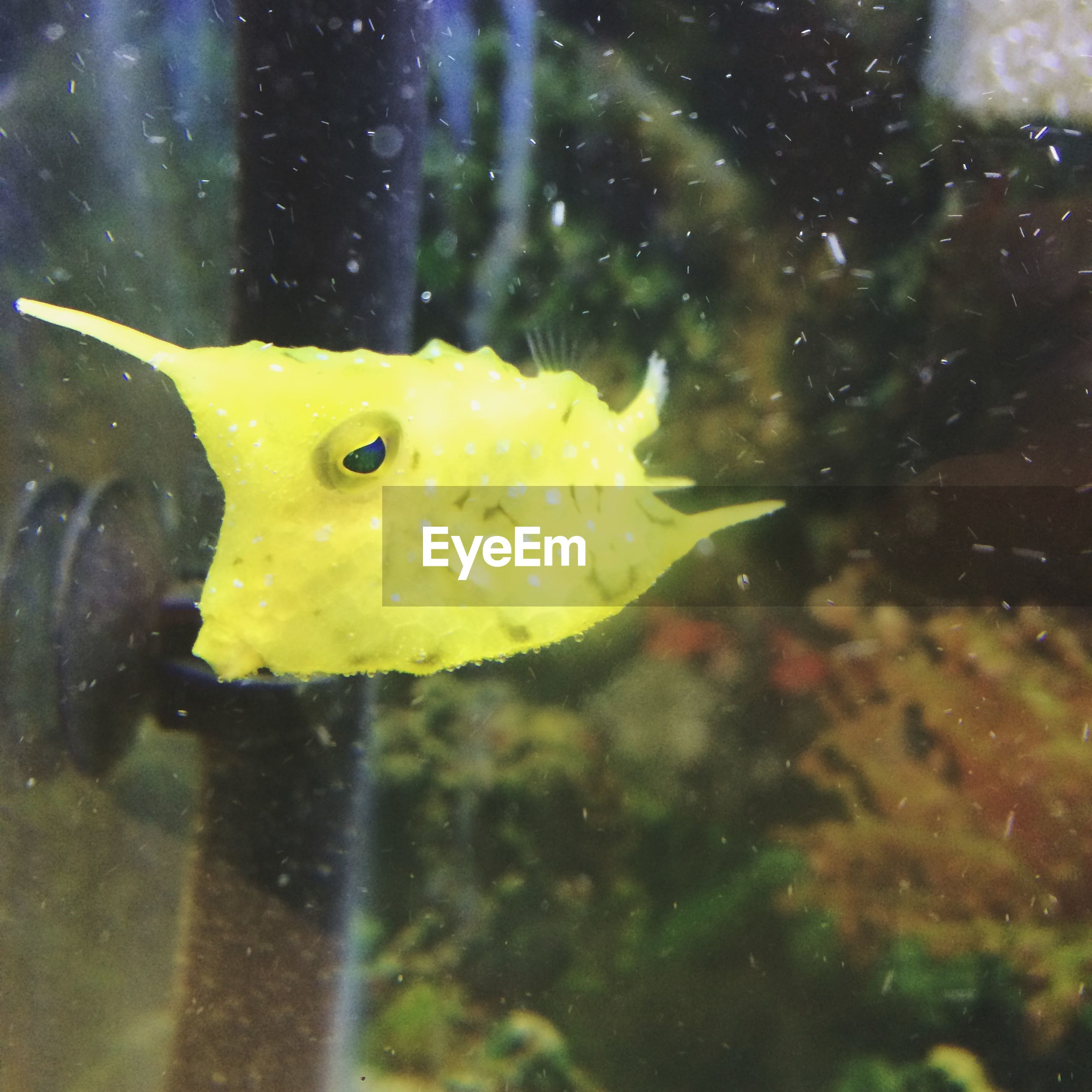 yellow, water, animal themes, underwater, close-up, one animal, animals in the wild, swimming, wildlife, fish, sea life, transparent, glass - material, nature, focus on foreground, aquarium, undersea, beauty in nature, no people, freshness