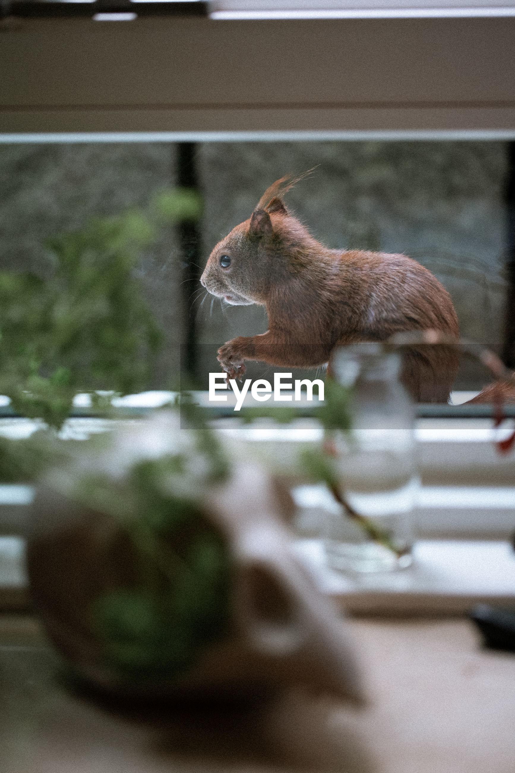 Hörnchen vor dem fenster