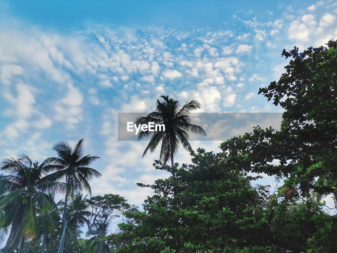 sky, plant, tree, palm tree, tropical climate, cloud - sky, growth, low angle view, beauty in nature, nature, no people, scenics - nature, coconut palm tree, day, tranquility, outdoors, tall - high, leaf, tranquil scene, green color, tropical tree, palm leaf