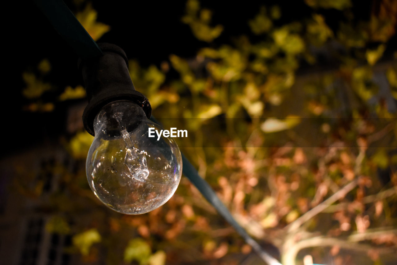 focus on foreground, close-up, nature, day, light bulb, plant, no people, transparent, outdoors, vulnerability, growth, selective focus, sphere, tree, fragility, lighting equipment, land, leaf, electricity, plant part