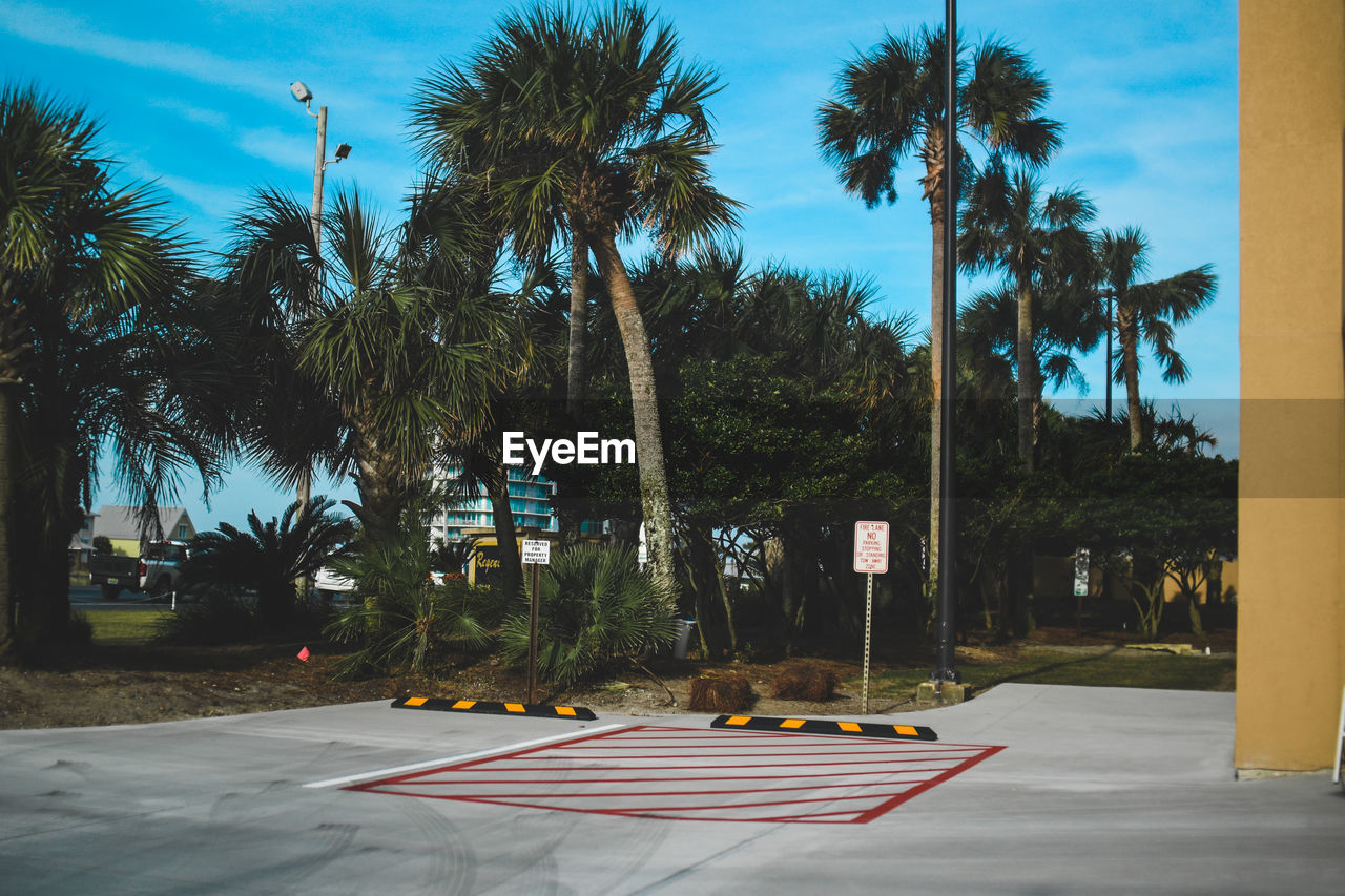 tree, plant, palm tree, tropical climate, sky, nature, no people, sunlight, growth, day, road, transportation, sign, outdoors, tree trunk, street, trunk, shadow, land, road marking, coconut palm tree, treelined