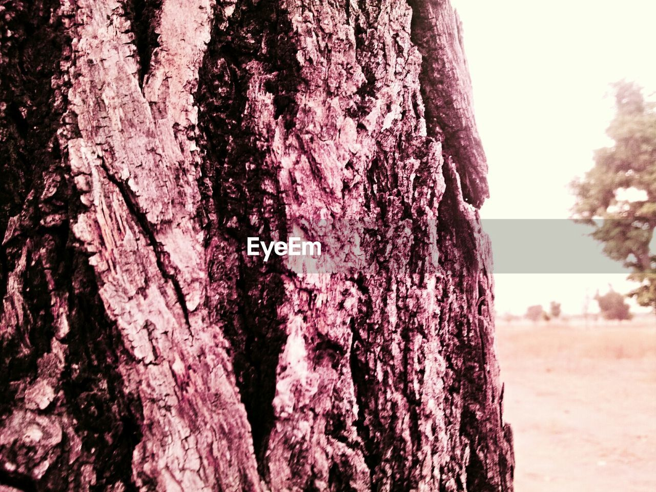 tree trunk, tree, bark, nature, growth, textured, day, beauty in nature, outdoors, close-up, no people, sky