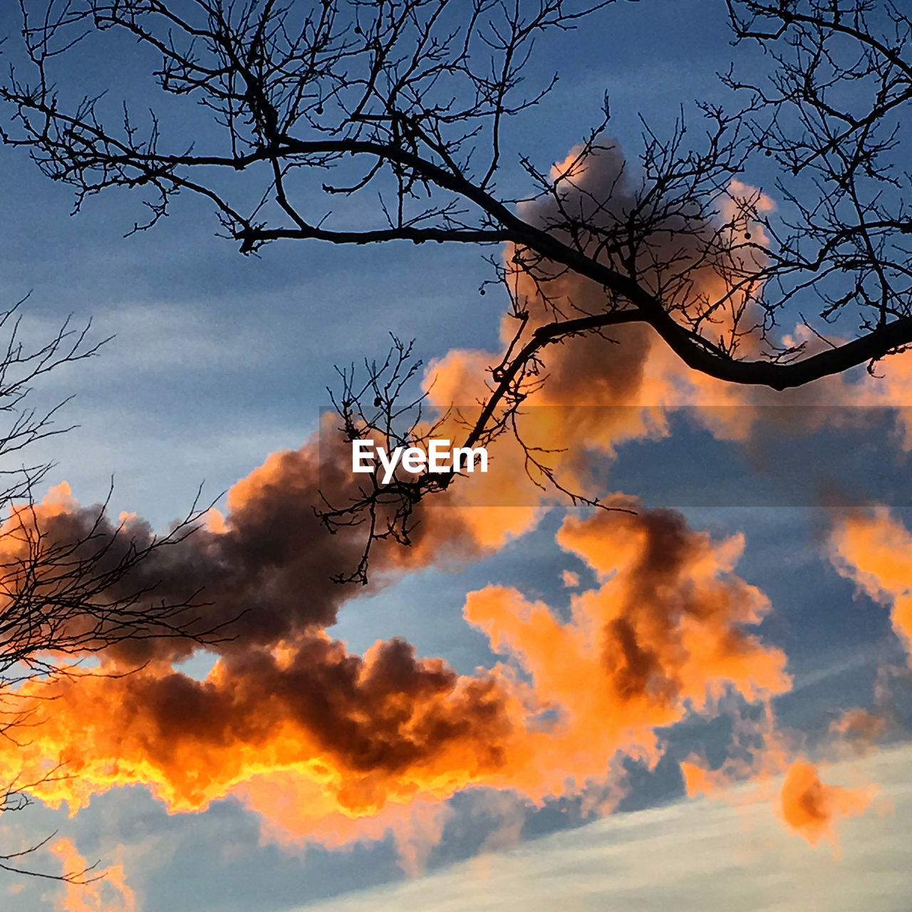 bare tree, sky, branch, low angle view, nature, tree, beauty in nature, no people, outdoors, cloud - sky, tranquility, sunset, day