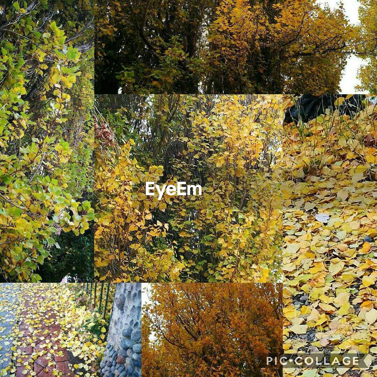 autumn, tree, nature, leaf, yellow, change, day, outdoors, no people, beauty in nature, growth, one animal, domestic animals, animal themes, mammal