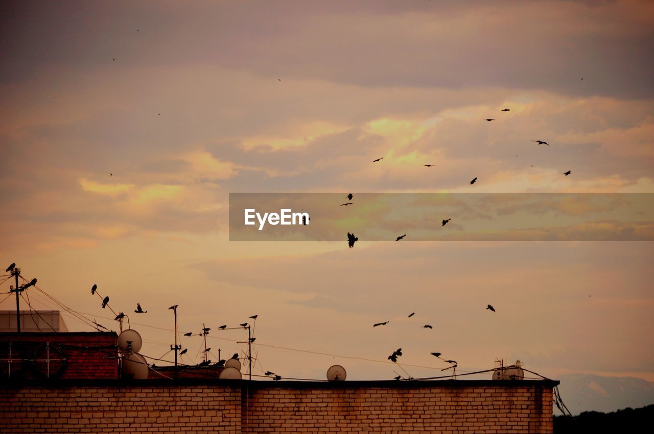 sky, vertebrate, bird, animal, animal themes, group of animals, animal wildlife, animals in the wild, architecture, cloud - sky, large group of animals, sunset, built structure, flying, nature, building exterior, no people, low angle view, flock of birds, roof